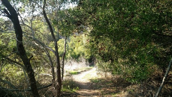 Kelvin Canyon Trail, Filiorum Reserve