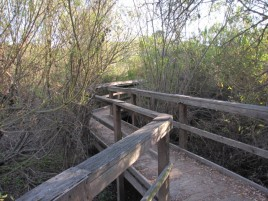 On the boardwalk, Nature Trail