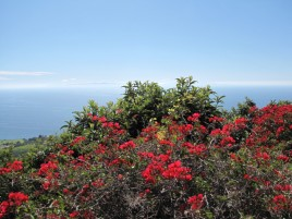Flowers and ocean view from the McBride Trail