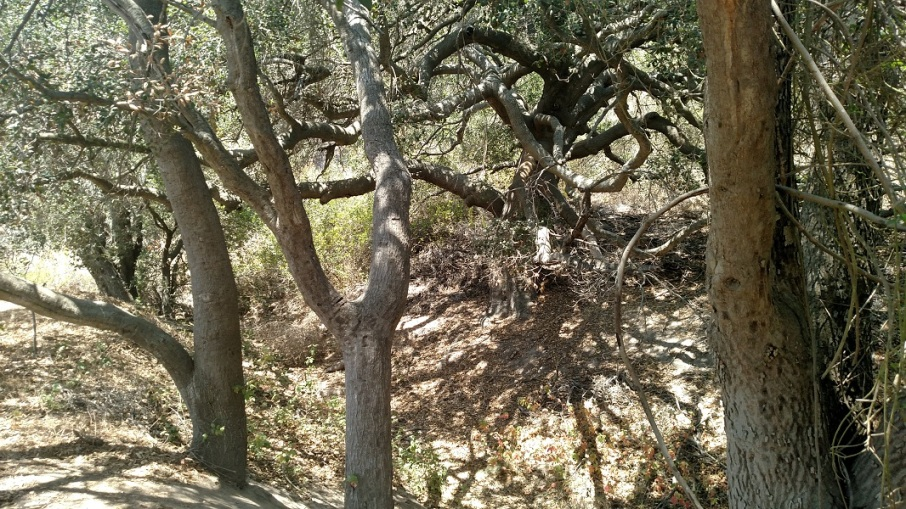 Deer Canyon Campground, Crystal Cove State Park