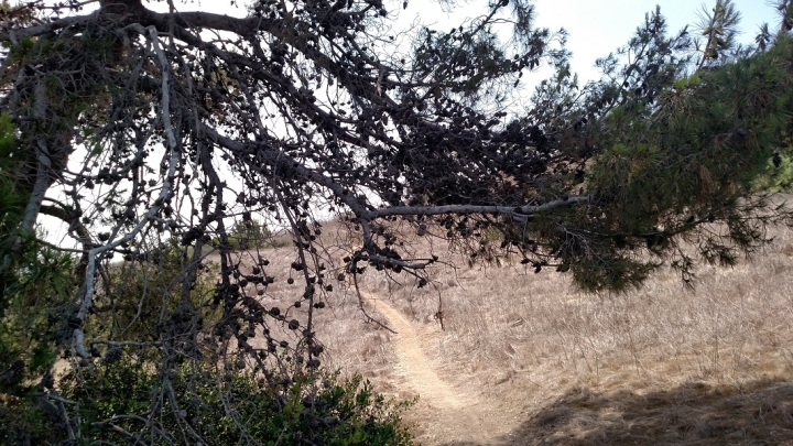 Switchback Trail, Rancho Palos Verdes, CA