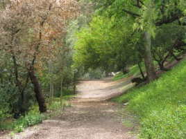 Wilderness Glen trail in Mission Viejo