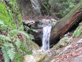 Waterfall at Decker Spring on the Mt. Wilson Trail
