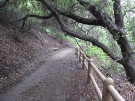 Nature trail in Sycamore Canyon Park