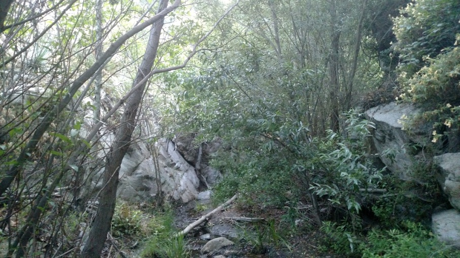 Mill Creek, Angeles National Forest