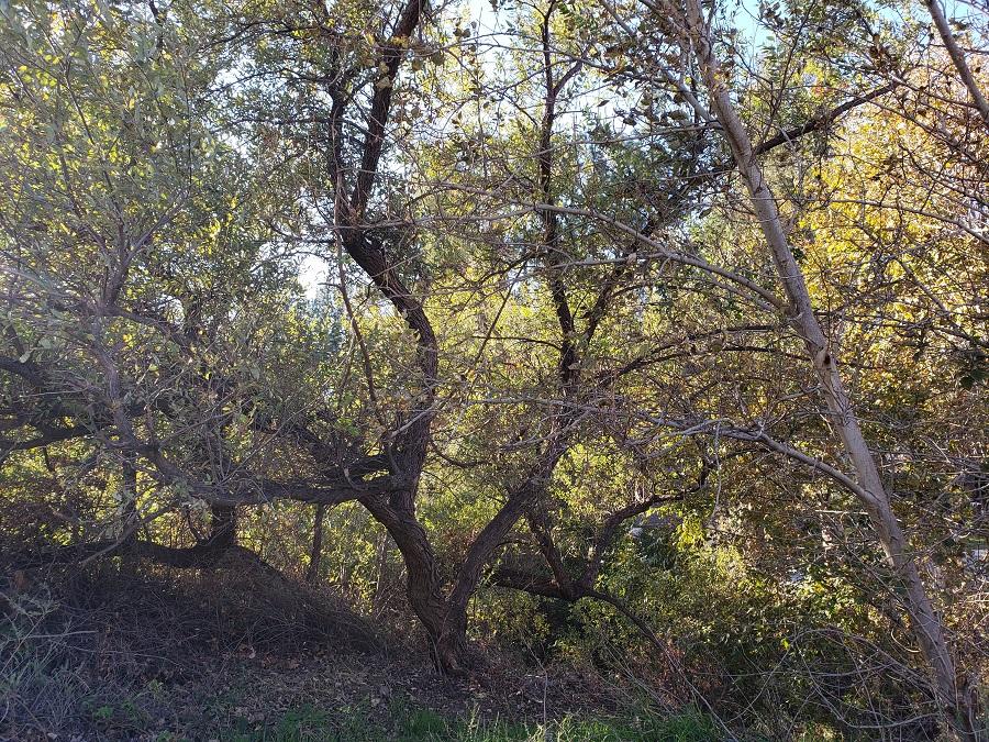 Creek Trail, Peters Canyon Regional Park, Orange, CA