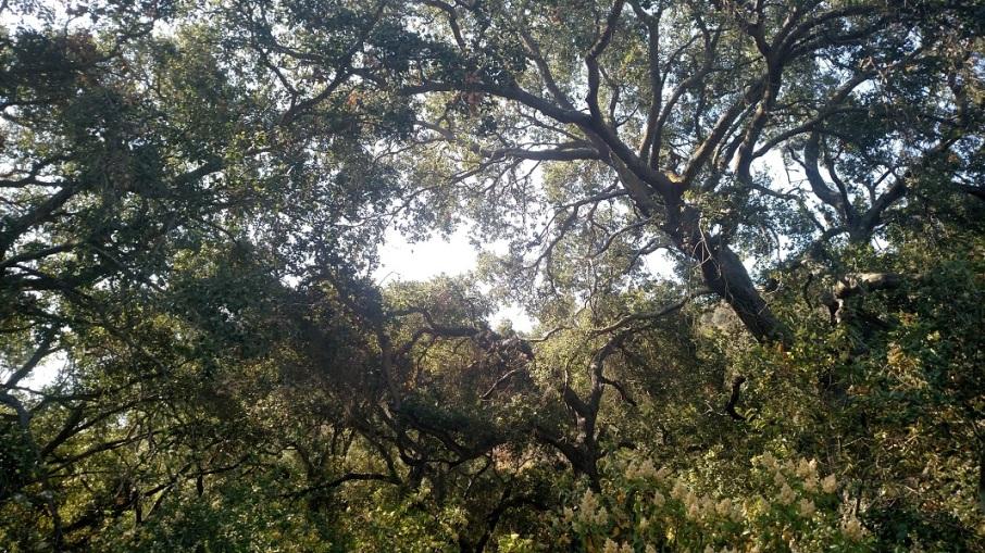 Camarillo Canyon Trail, Laguna Coast Wilderness Park