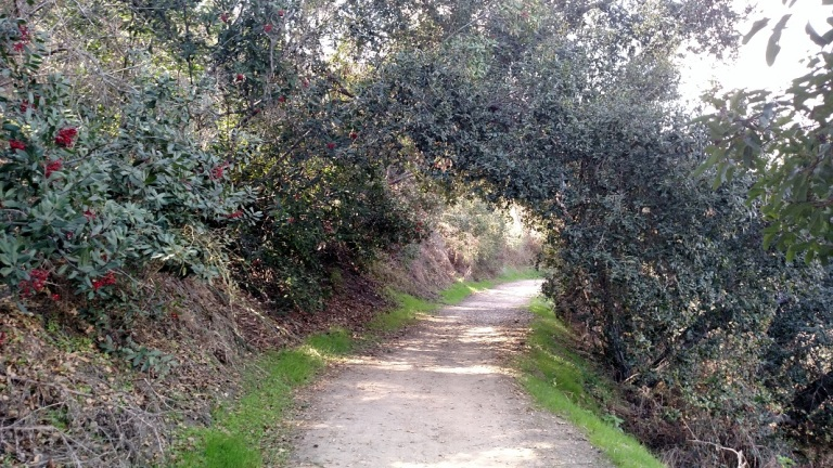 Schabarum Trail, Puente Hills, CA