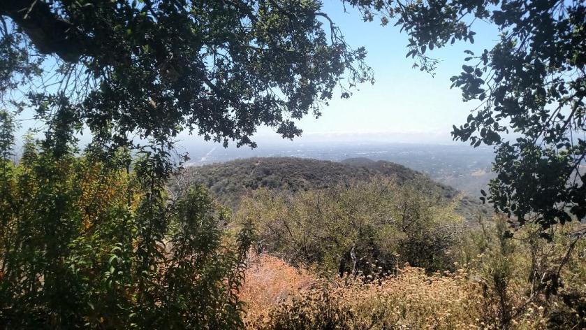 Prajna Tree, Tigertail Trail, Los Angeles