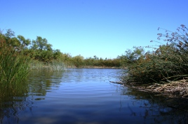Pond at the San Joaquin Wildlife Sanctuary