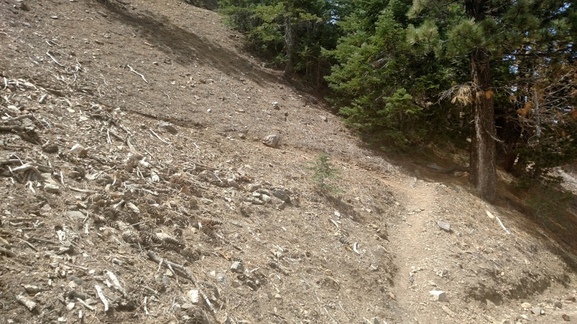 Dawson Saddle Trail, Angeles National Forest
