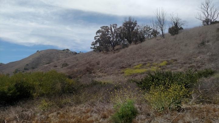Portugese Bend Nature Reserve, Palos Verdes Peninsula, CA