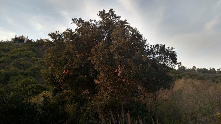 Buck Gully Reserve, Newport Beach, CA