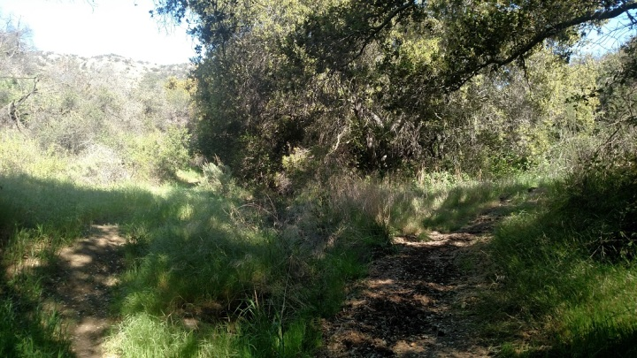 Loop Trail, Conejo Ridge Open Space
