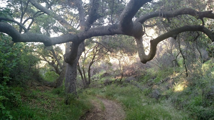 Sundown Trail, Conejo Ridge Open Space