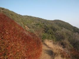 Hills on the Bienvenida Trail, Topanga State Park