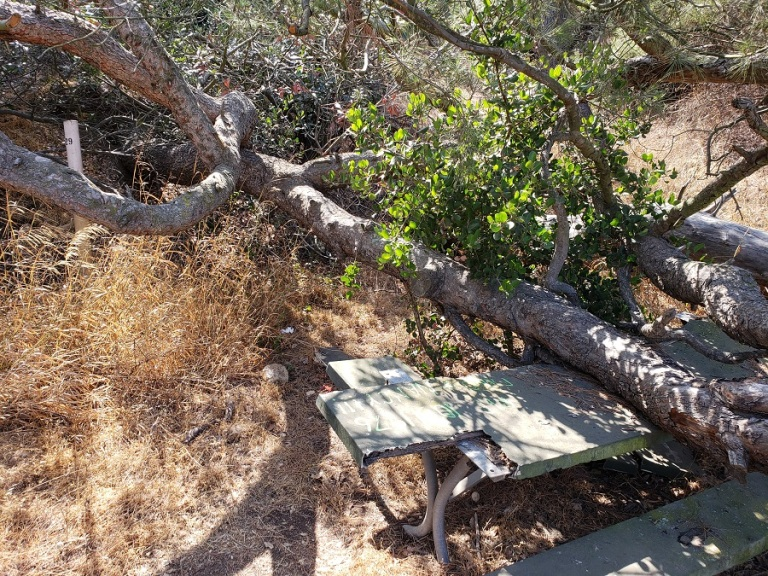 Haunted Table 29, Griffith Park