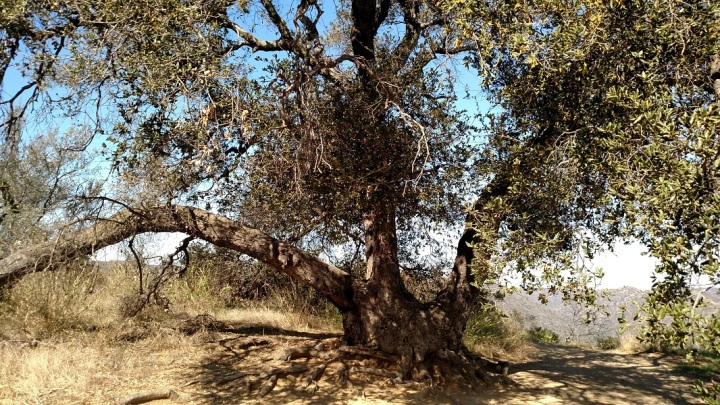 Backbone Trail, Santa Monica Mountains