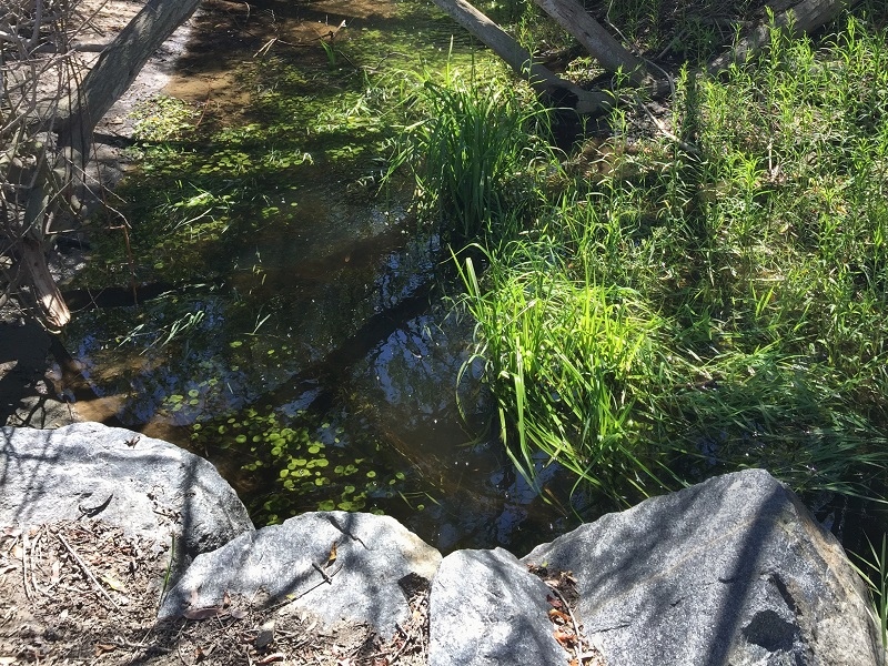 Harriet Wieder Park, Huntington Beach, CA