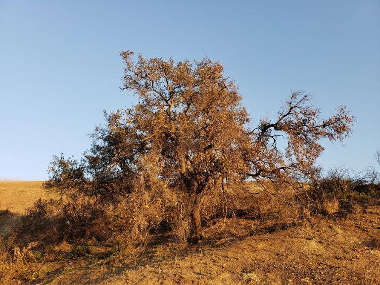 Santiago Oaks Regional Park, Orange County CA