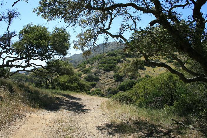 Blackjack Mountain Catalina Island Nobody Hikes In La
