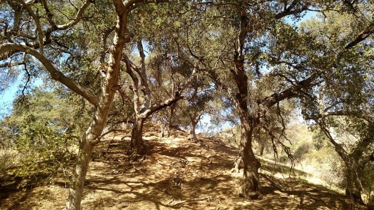 Towsley Canyon, Santa Clarita, CA