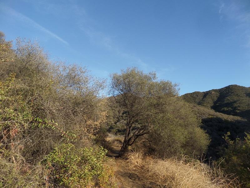 Trancas Canyon, Malibu, CA