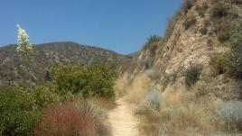 Brown Mountain Fire Road, above El Prieto Canyon