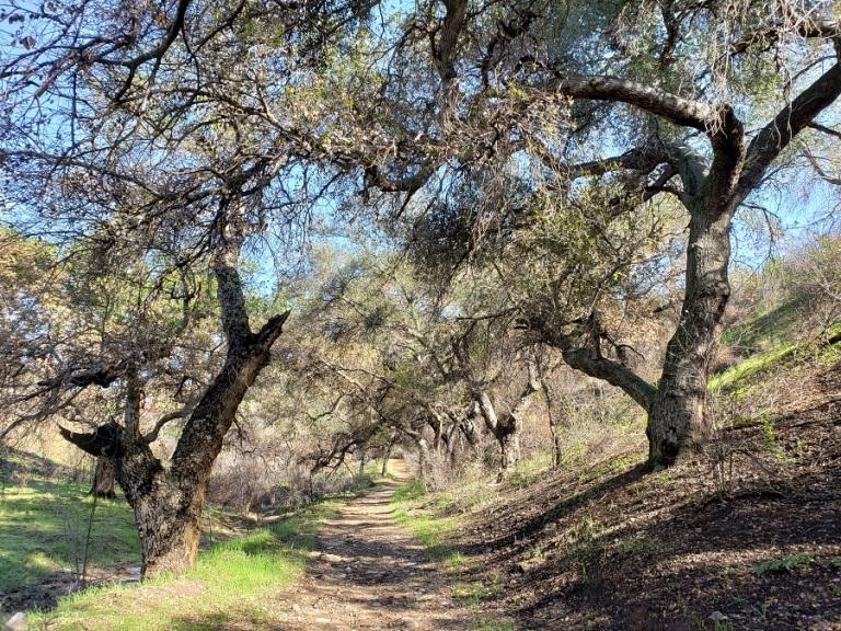Upper Las Virgenes Canyon, Calabasas, CA