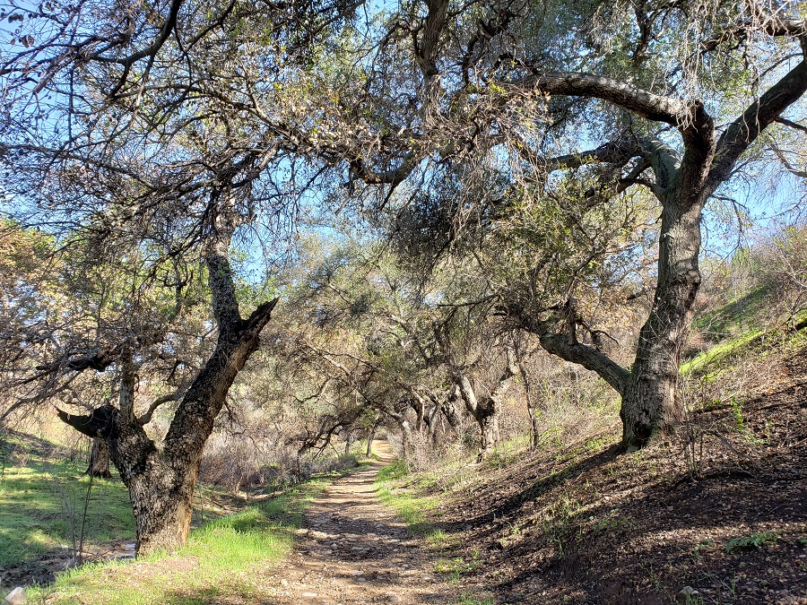Upper Las Virgenes Canyon, Calabasas, CA