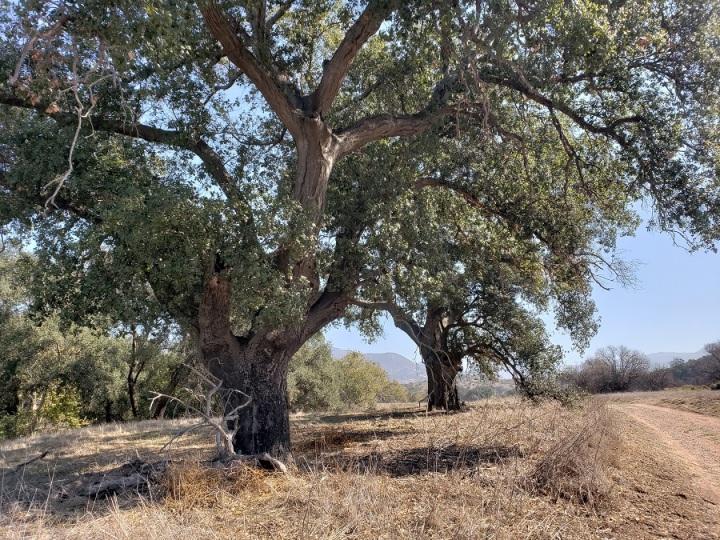 Limestone Canyon Regional Park, Orange County, CA