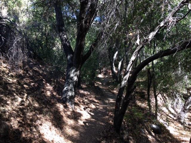 Along Matilija Creek, Wheeler Gorge Nature Trail