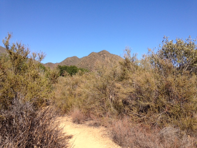View of the Topatopa Ridge from the Wheeler Gorge Nature Trail