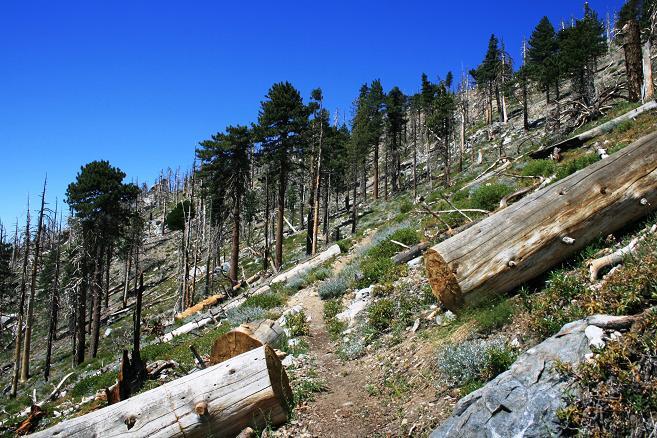 Big Cienega Trail on the way to Mt. Islip