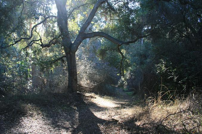 """The """"Rainforest"""" on the Fryman Canyon Loop"""