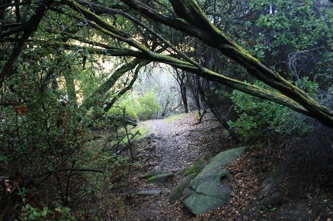 Greenery on the Garapito Canyon Trail, Topanga State Park