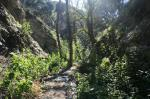 4:30 - Stream crossing in Cook Canyon