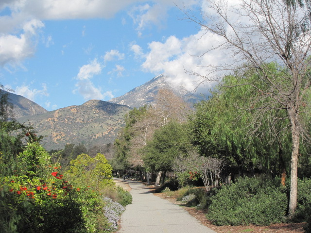 Foliage and mountains, Thompson Creek Trail