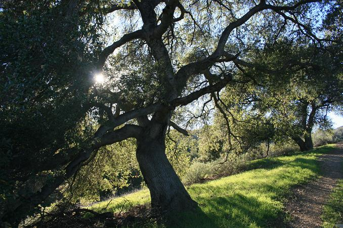 Oak woodland in the Yaroslavsky Open Space