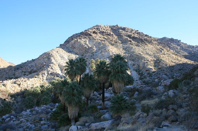 Fortynine Palms Oasis, Joshua Tree National Park