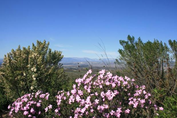 Flowers and big views on the Oakbrook Vista Trail