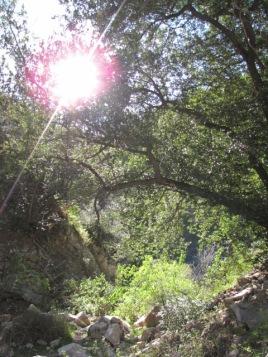 Dusk in Rubio Canyon