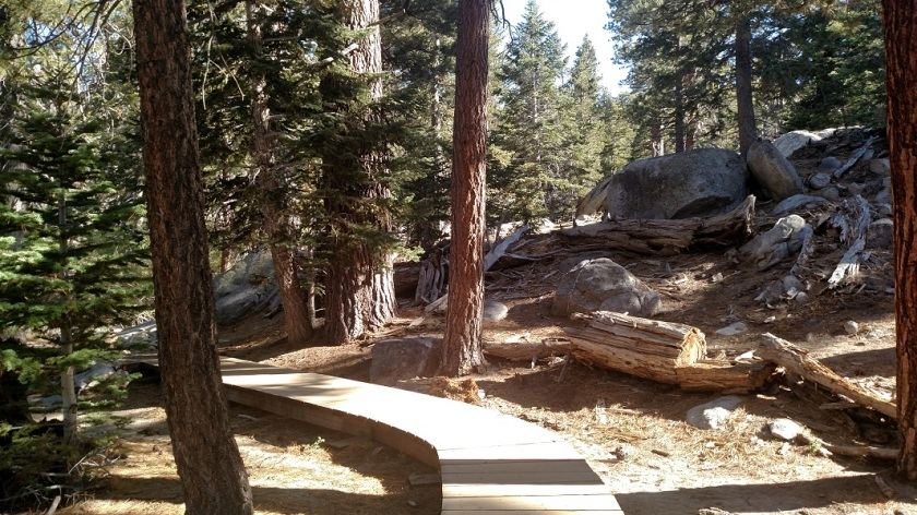 Willow Creek Trail, Mt. San Jacinto State Park