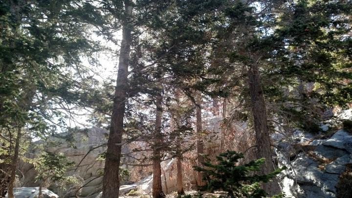 Willow Creek Trail, Hidden Divide, San Jacinto State Park