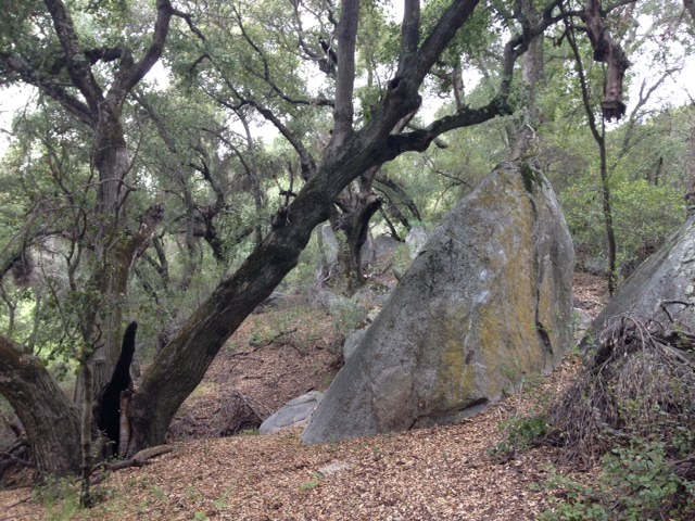 Oak woodland on the Morgan Trail, Cleveland National Forest