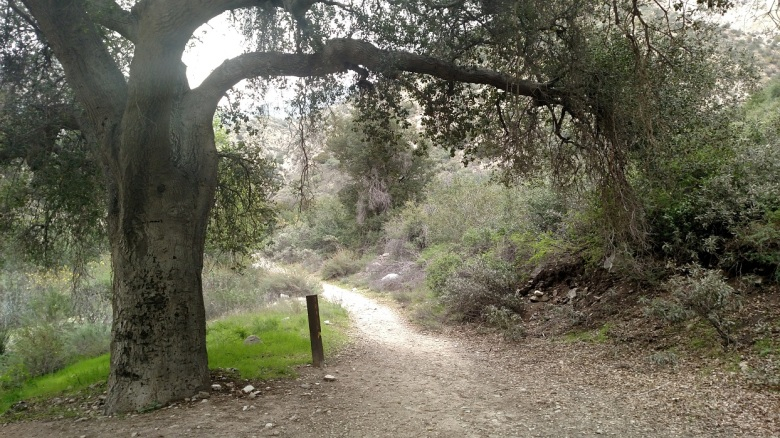 Trail Canyon, Angeles National Forest, CA