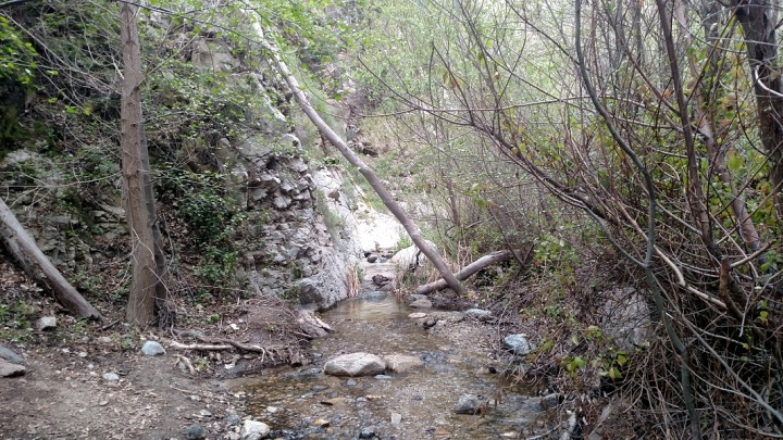 Trail Canyon, Angeles National Forest
