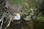 0:27 - Crossing the stream
