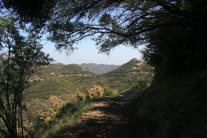 Foliage on the Yerba Buena Trail