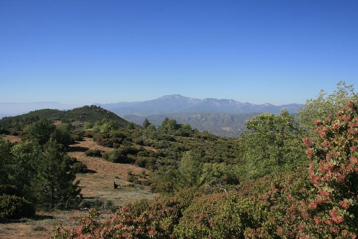 Looking north from just below Cahuilla Mountain's summit